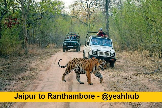 jaipur-to-ranthambore